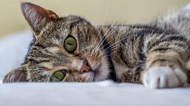 Прививка на дому коту